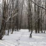 Cesta přes Olšovský vrch