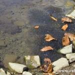Žabí vajíčka v potoce
