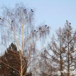 Koruny stromů za obřadní síní