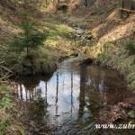 Lesní zrcadlo v Kotelnici
