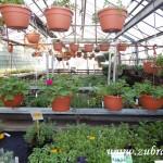 Oseva skleník jaro 2015 0006