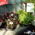 Oseva skleník jaro 2015 0007