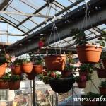 Oseva skleník jaro 2015 0010
