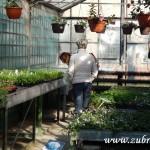 Oseva skleník jaro 2015 0020