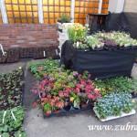 Oseva skleník jaro 2015 0026