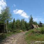 Cesta v Kotelnici