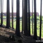 Děravý les na Ostrém