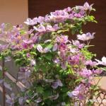 Zuberské květy 1