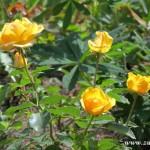 Zuberské květy 10
