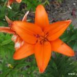 Zuberské květy 5