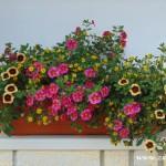 Zuberské květy 7