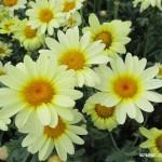 Zuberské květy 9