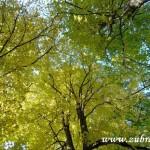 Fotky pro radost ze Zubří podzim 20150009