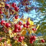 Fotky pro radost ze Zubří podzim 20150018
