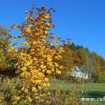 Fotky pro radost ze Zubří podzim 20150021