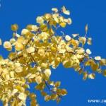 Fotky pro radost ze Zubří podzim 20150040