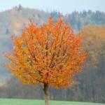 Barevná koruna stromu