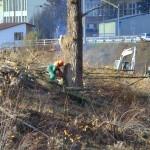 Kácení stromu u Bečvy 1