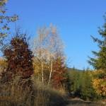 Listopad nad Boňkovem