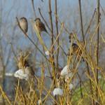 Ptačí návštěva