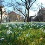 Sněženková zahrada