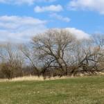Vrby na Videckém kopci