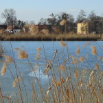 Hamerský rybník 1