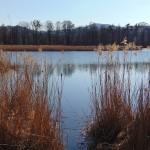 Hamerský rybník 2
