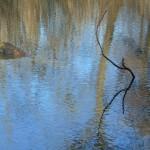 Hamerský rybník 4