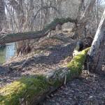 Hráz Hamerského rybníka