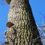 Hráz Hamerského rybníka a houby