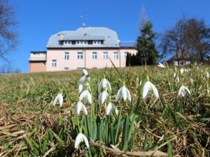 Sněženky u Gregorovy vily
