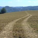 Cesta v poli u Starozuberské cesty
